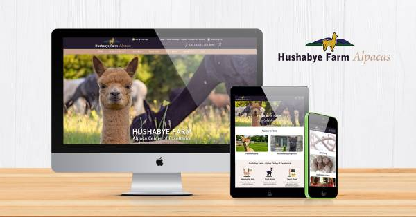 Alpaca Website Design